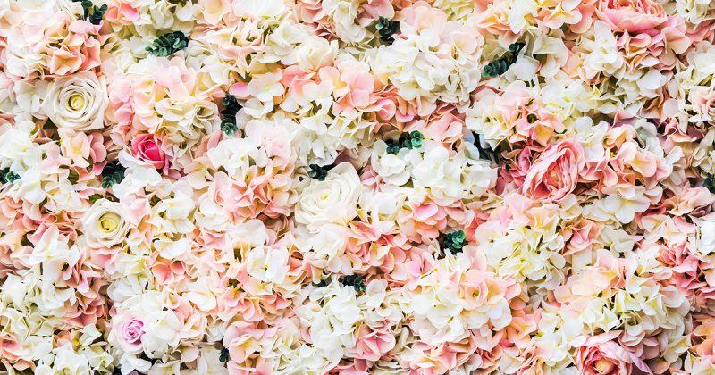 Blomstervägg med rosa blommor